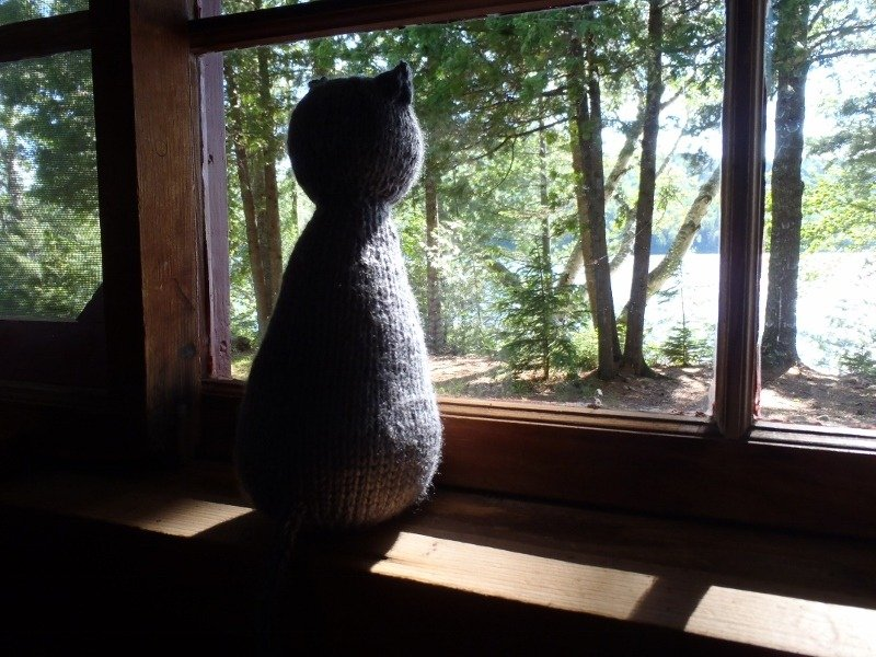 Cecile Cat in Window