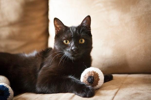 Eyeballs with Cat - photo by KnitPicks